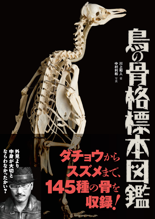 鳥の骨格標本図鑑 - Bird Skeletal specimen picture book.